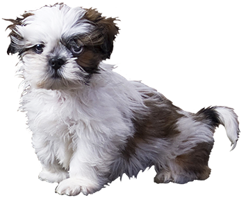 baby dog clipart