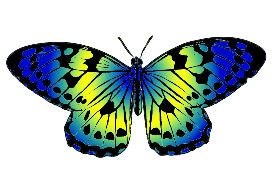 blue and yellow butterfly clip art