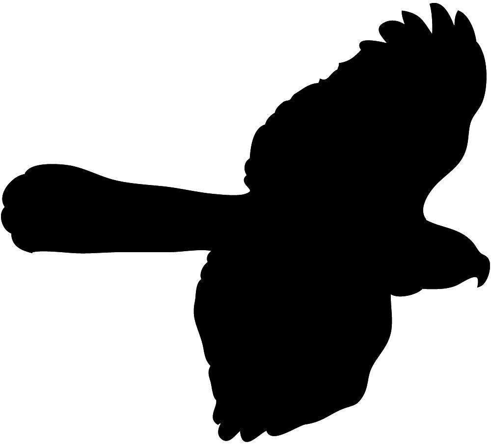Hawk in flight seen from below