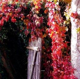 fall leaves in backyard