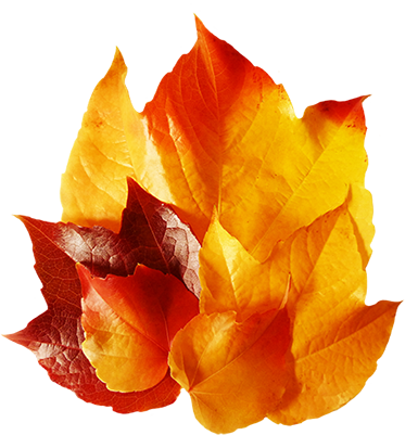 five beautiful fall leaves
