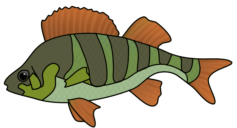 green orange fish drawing