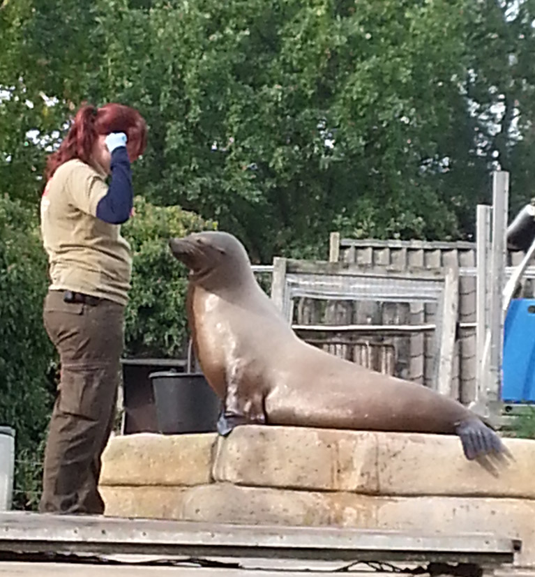 sea lion in zoo with zookeeper