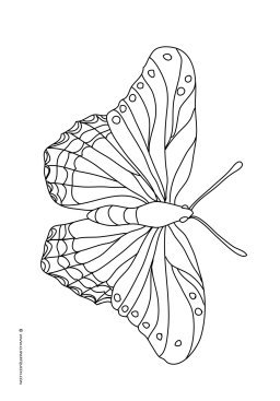 one big beautifl butterfly to color