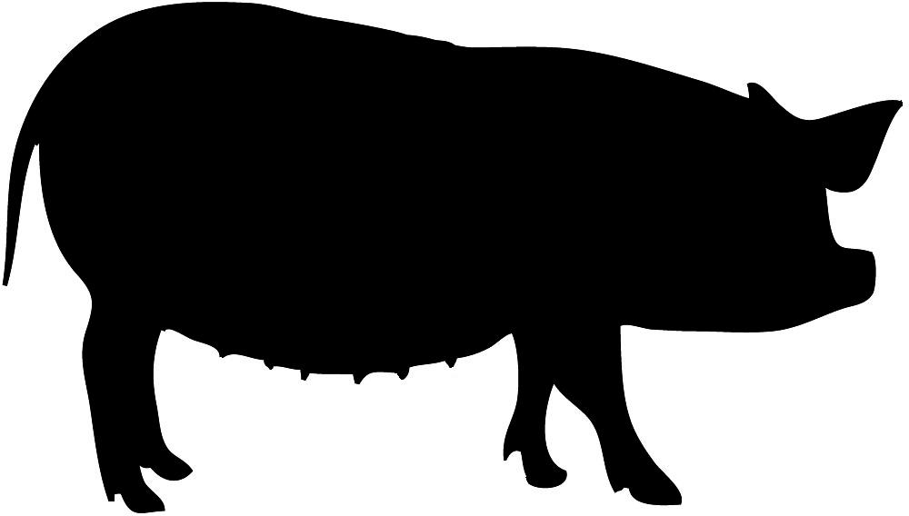 big black silhouette of pig