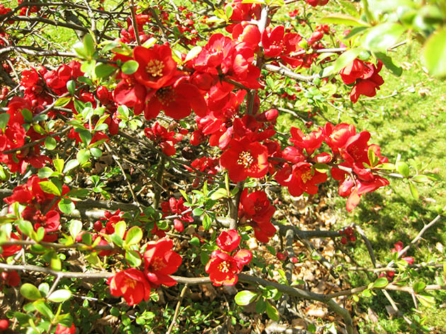 Lots of red flowers
