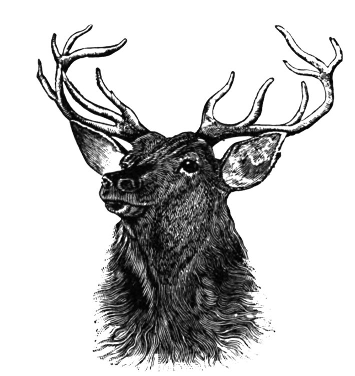 stag drawing