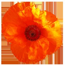 red poppy flower clipart