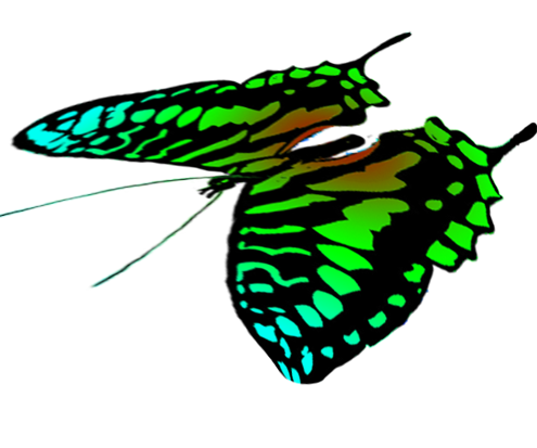 free butterflies drawings