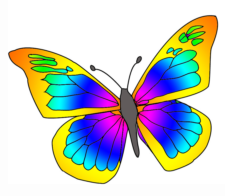 many colored butterfly