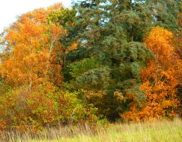 trees with red green yellow leaves