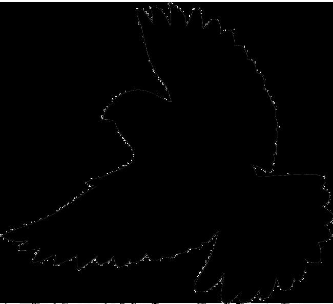 silhouette of flying bird