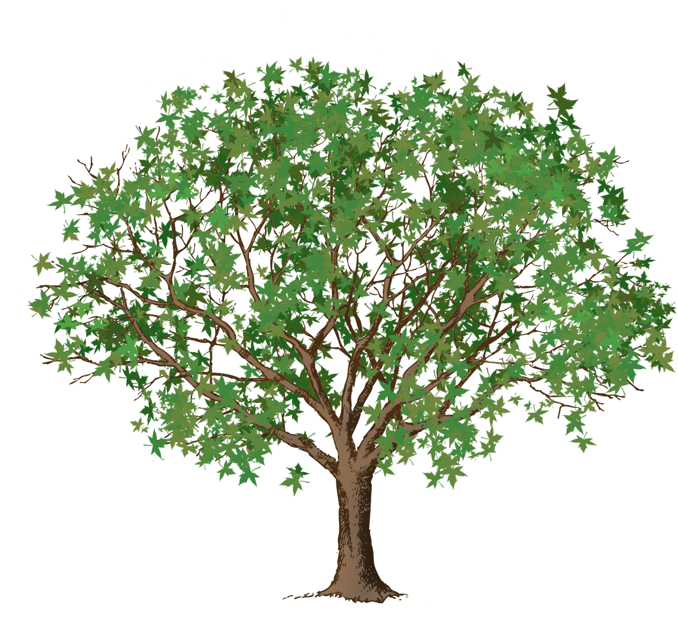 green leaves brown tree clipart