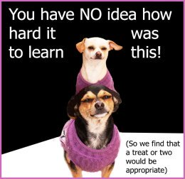 dog picture quote about tricks and treats