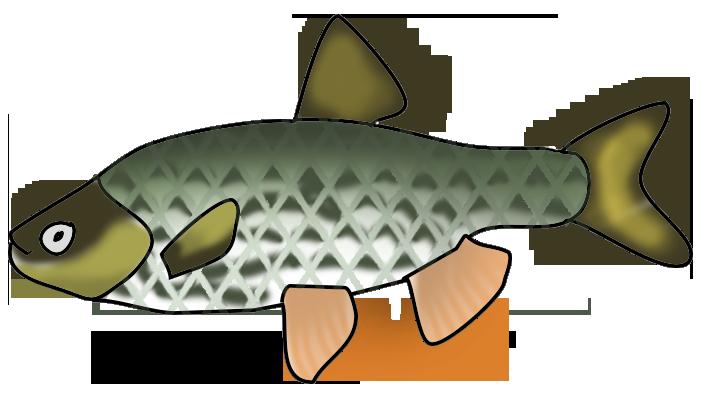 Salt water fish