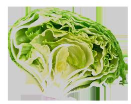 fresh salad clipart