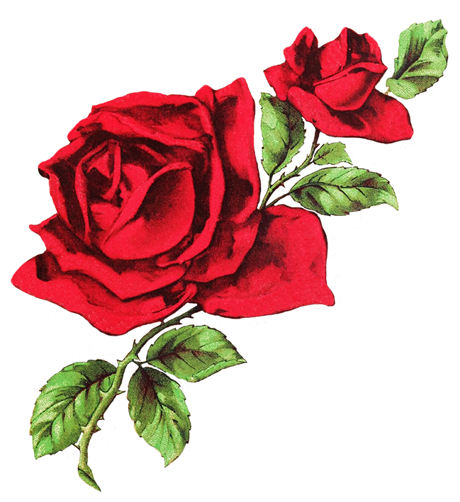 drawing of two red roses