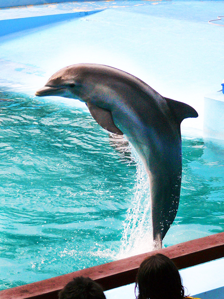 jumping dolphin photo