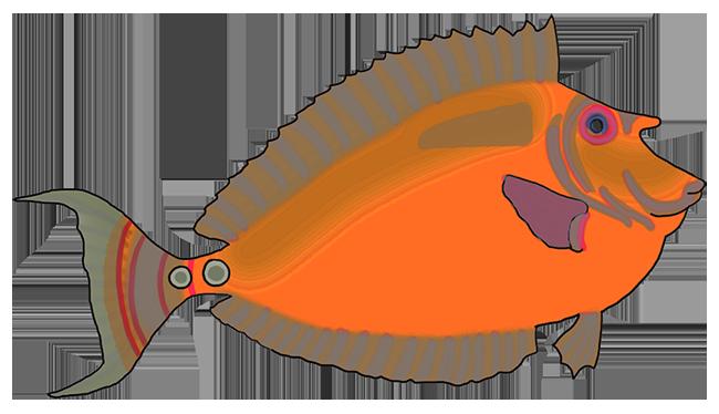 orange fantasy colored fish