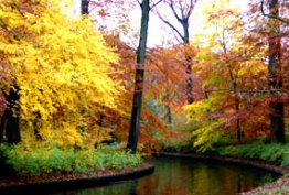fall landscapes with water