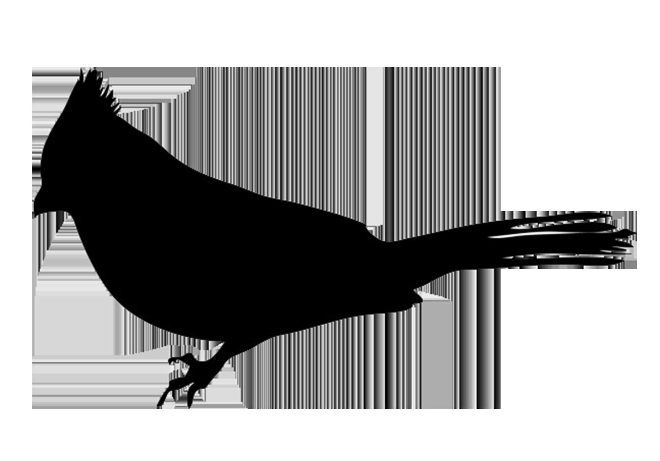 bullfinch silhouette