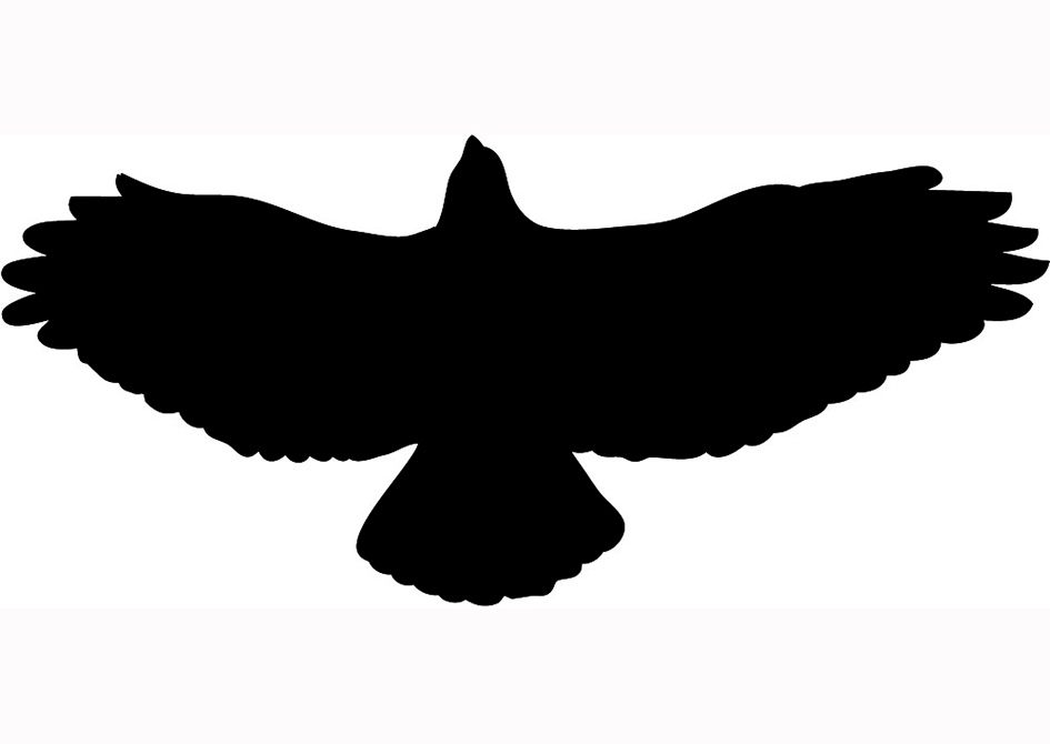 Hawk silhouette black flying