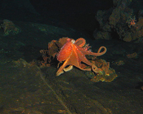 octopus photos