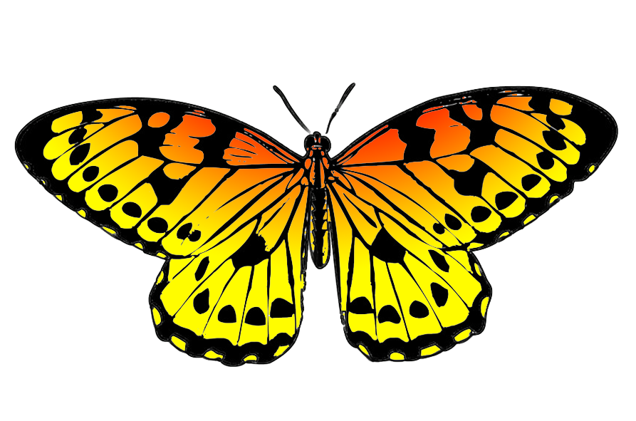 black and orange drawing of butterfly