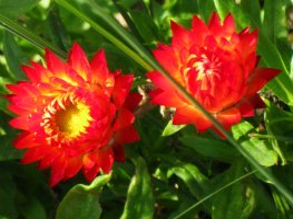 Very orange flowers picture