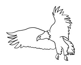bald eagle drawings flying eagle