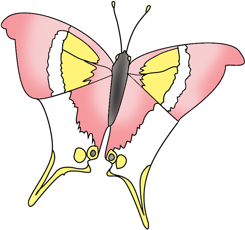 pink colored butterfly image