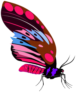 red purple butterfly drawing