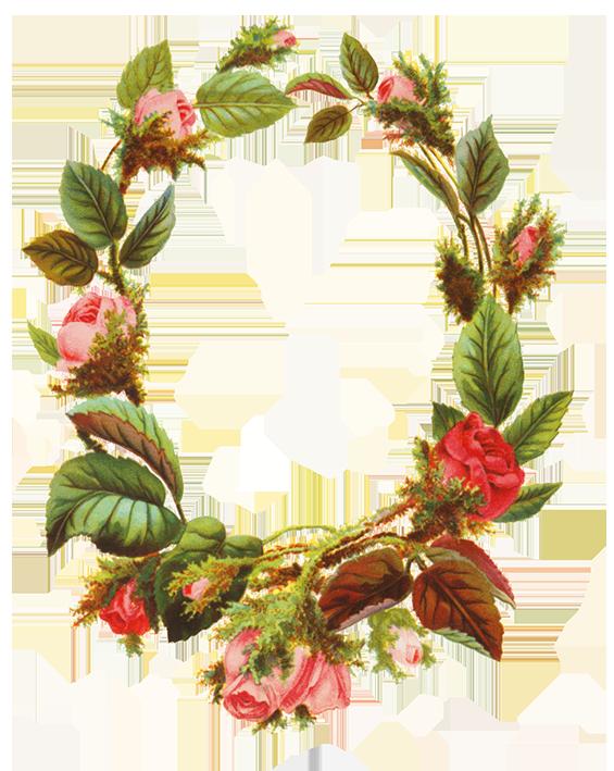 roses making a flower frame