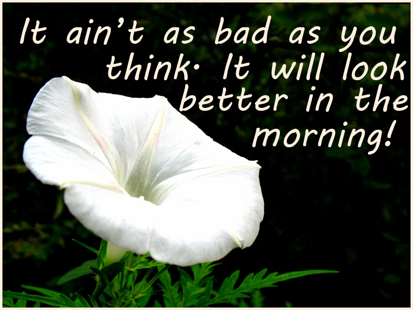morning picturequote white flower