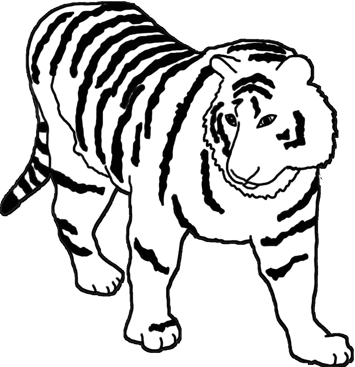 tiger sketch black white