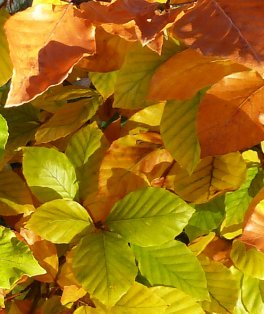 red yellow and green leaves