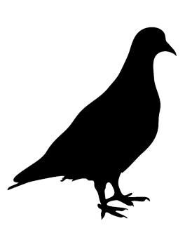 silhouette of pigeon