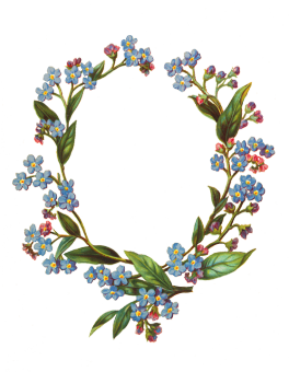 forget-me-not flower frame