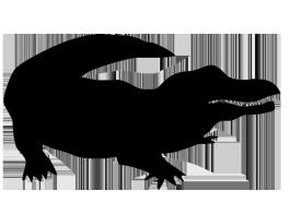 silhouette of crocodile