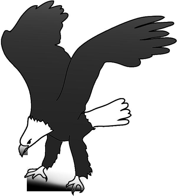 Bald eagle drawing landing for prey