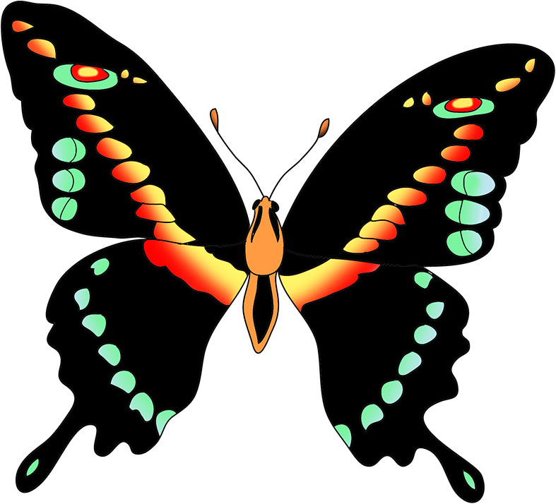 black yellow butterfly