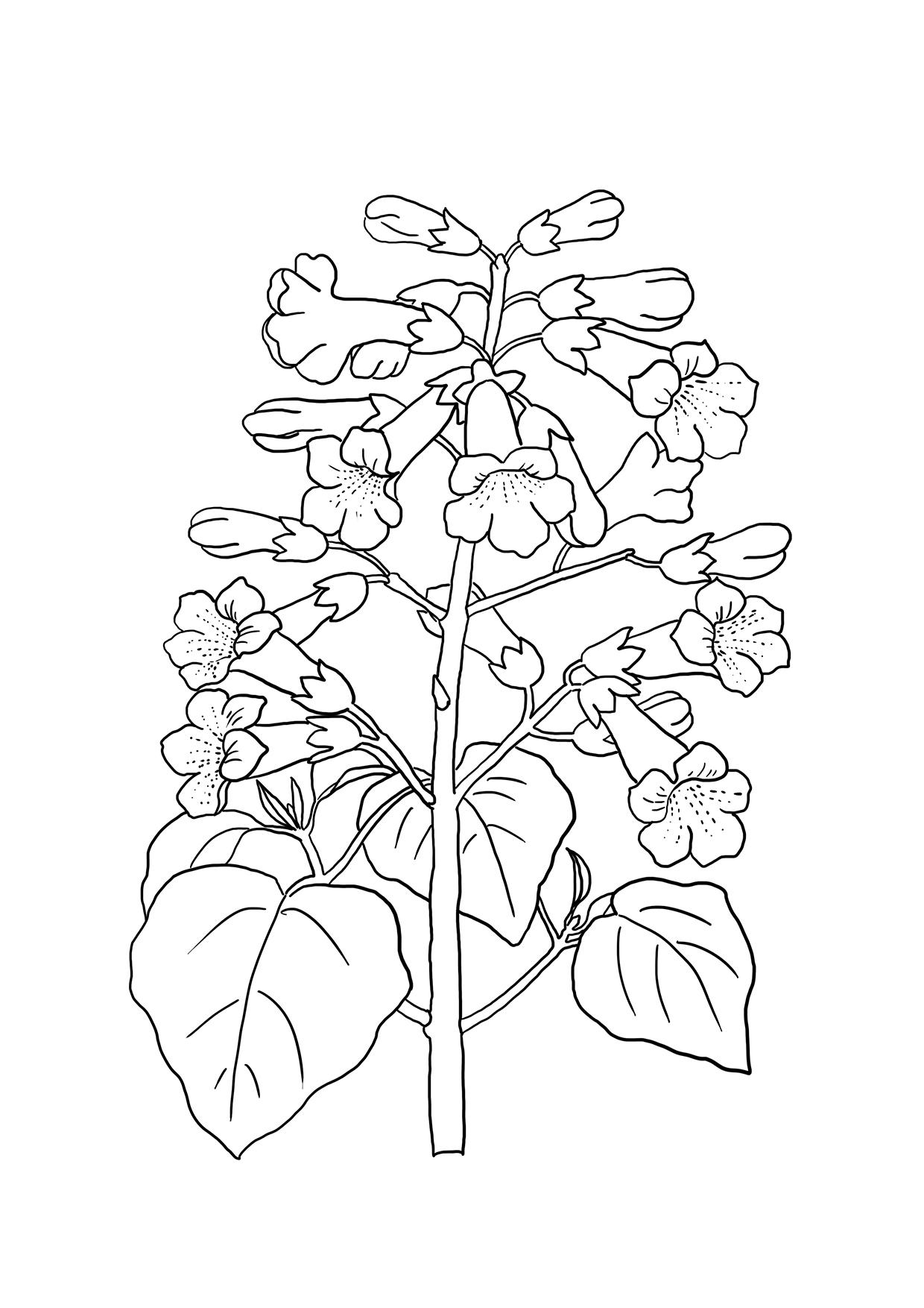 flower coloring printable