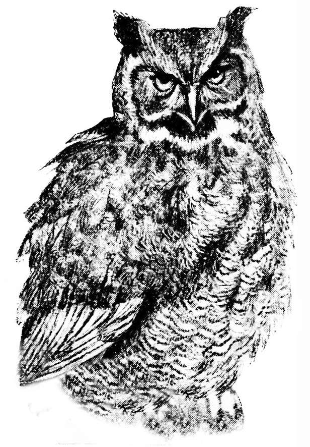 great horned owl on tree drawing