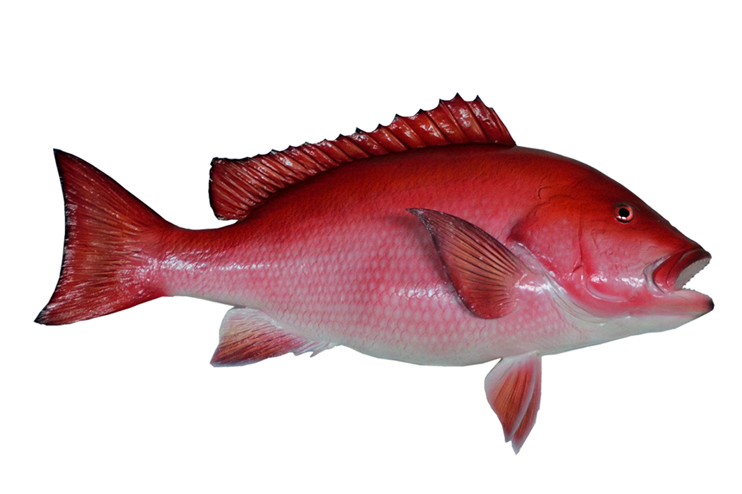Red snapper fish mount clipart