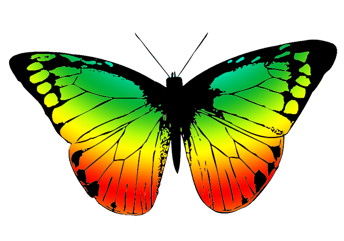 butterfly with many colors