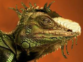 dragonhead clipart