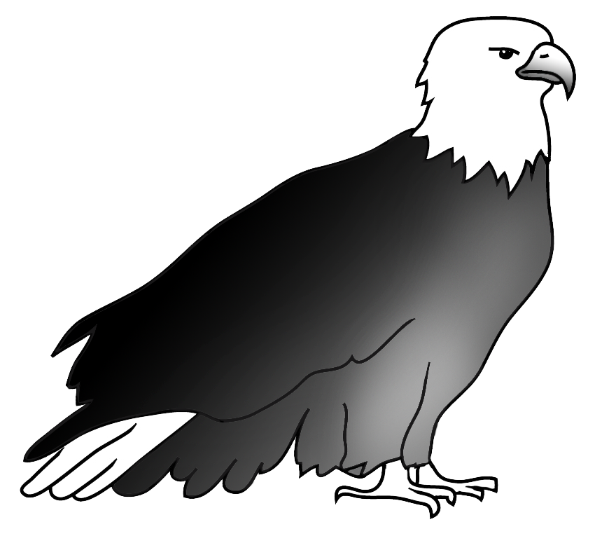 resting bald eagle drawing