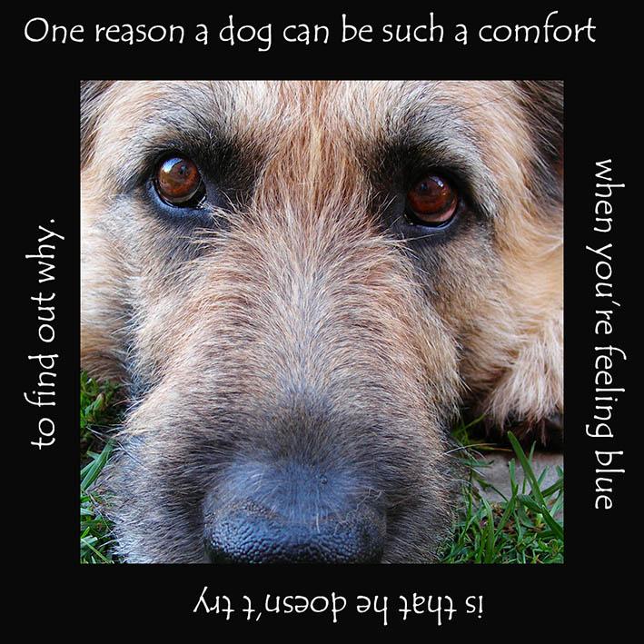 comfort dog