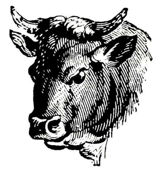 sketch of bull's head black white