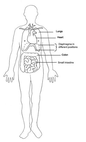 human body diagram heart lungs intestine